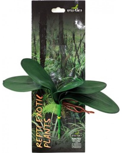 Repti Exotic Plant-Phalaenopsis amabilis 876026 by Reptiles-planet