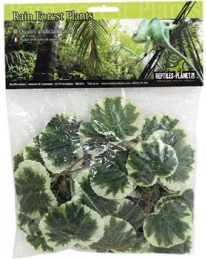 Congo Jungle Vine 2.6 m  876256 by Reptiles-planet